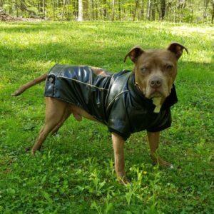 Beez in leather jacket-v1